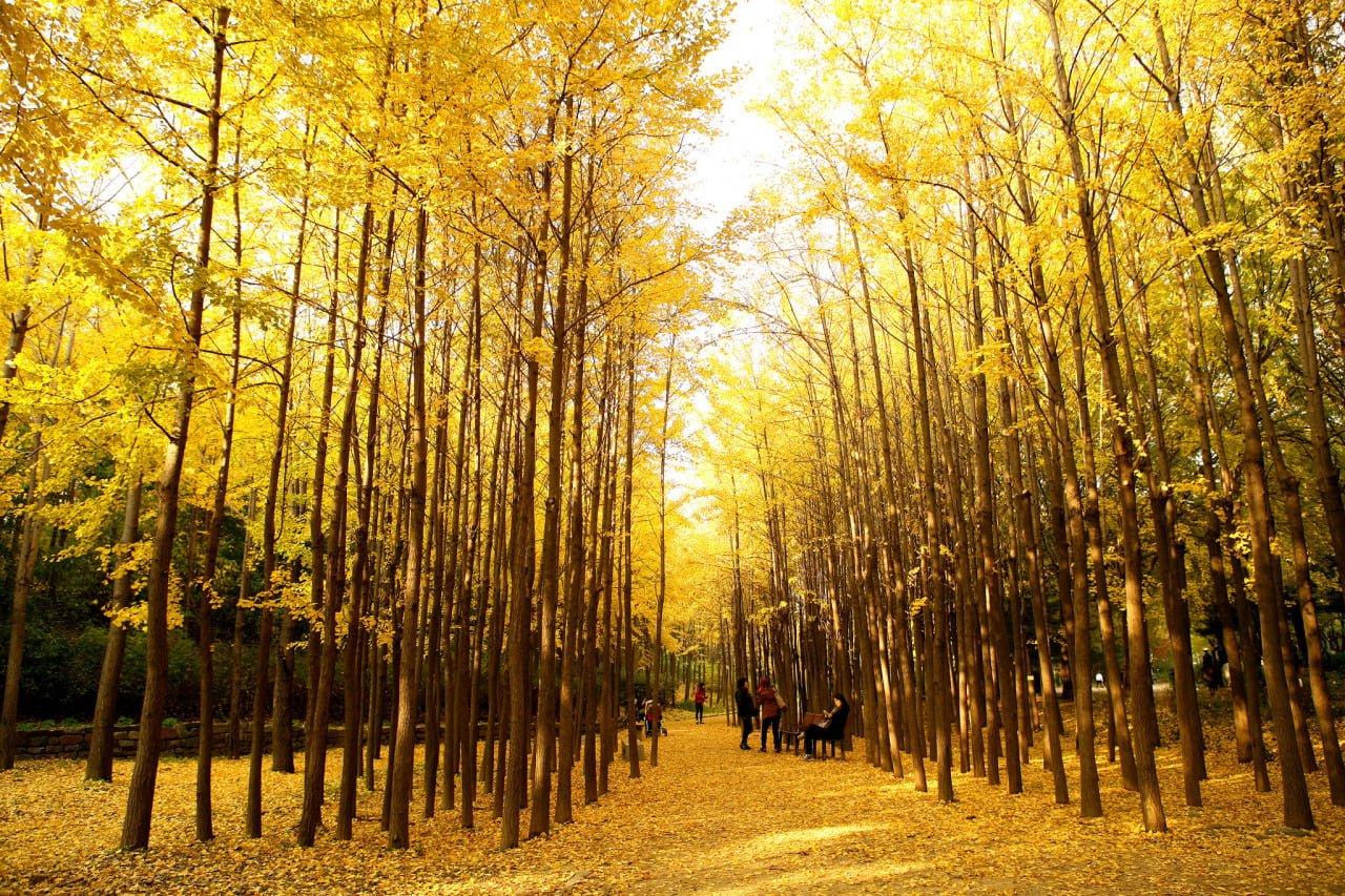 Lý do bạn nên đi du lịch đất nước Hàn Quốc vào mùa thu 4