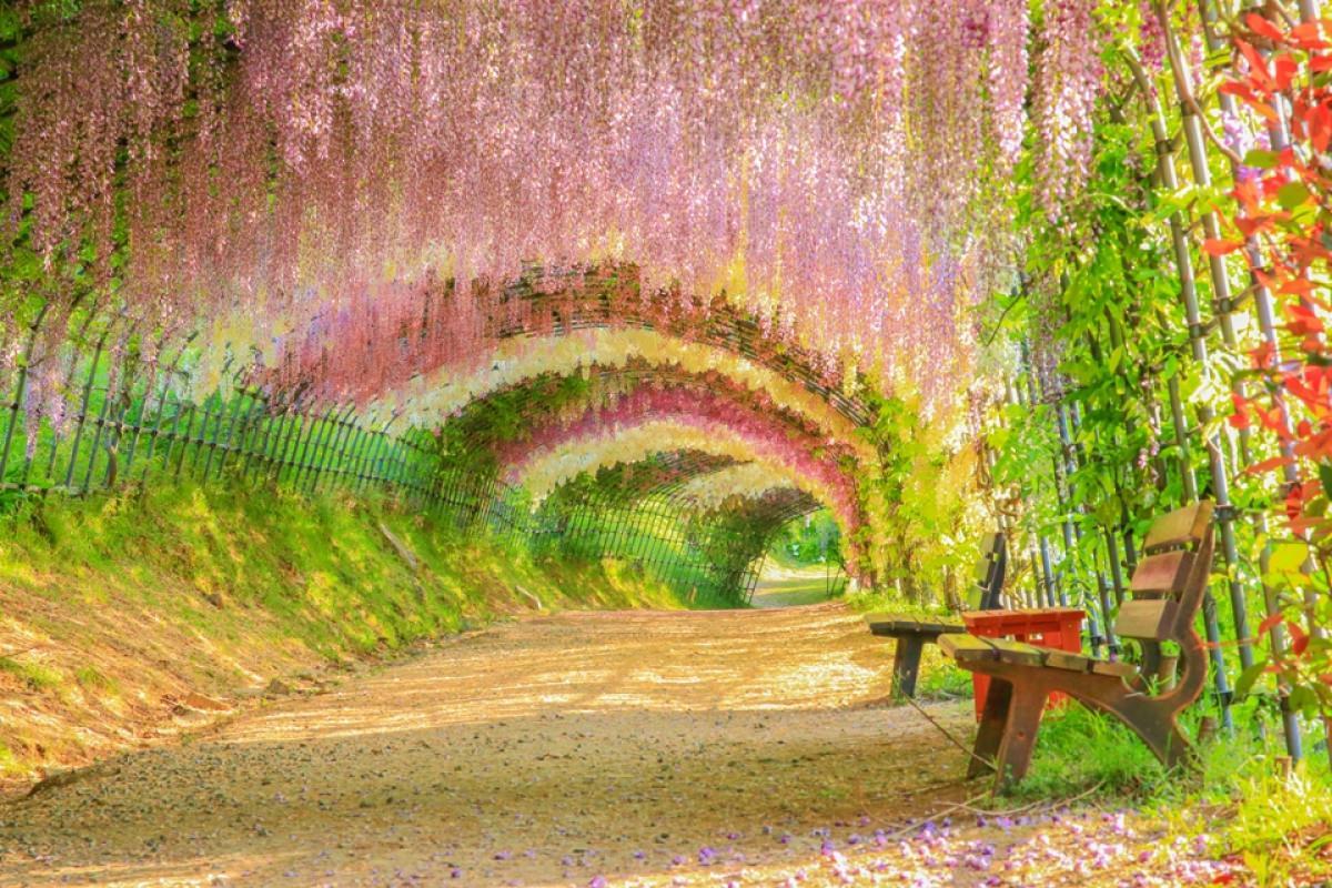 Kết quả hình ảnh cho Vườn hoa Kawachi Fuji