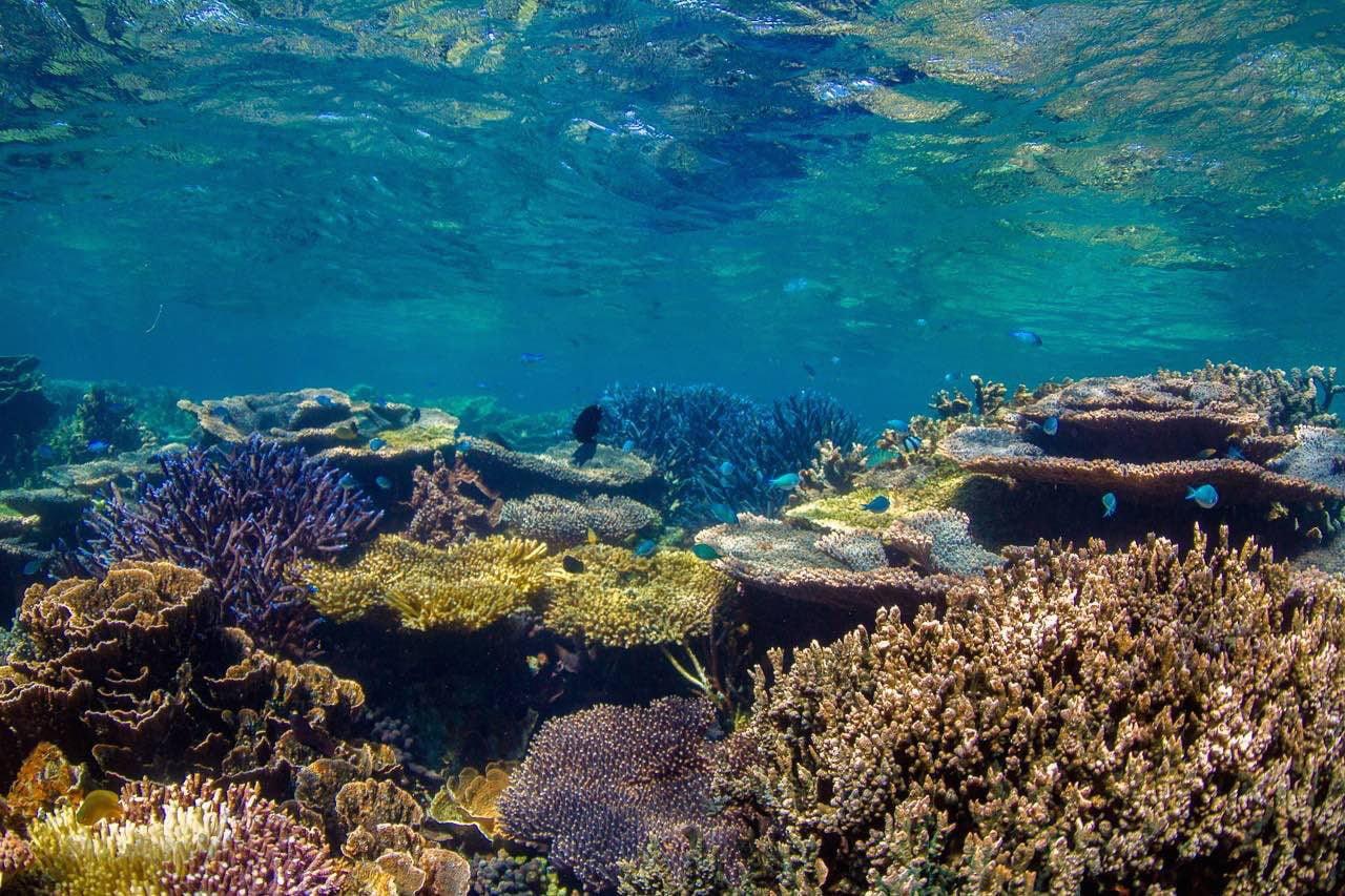 7 điểm ngắm san hô nổi tiếng ở Australia 1