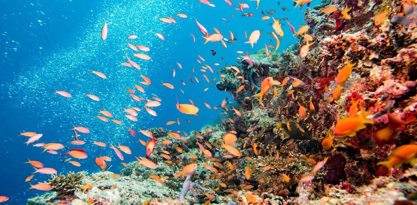 Kết quả hình ảnh cho Rạn san hô Great Barrier