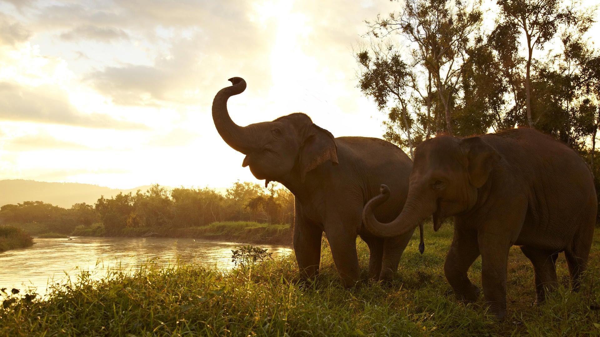 Kết quả hình ảnh cho voi thái lan