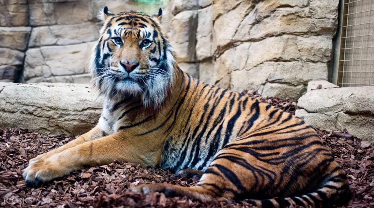 Ngủ trong sở thú và những trải nghiệm nên thử ở London 1