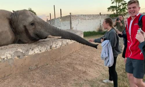 Phản ứng bất ngờ của voi khi bị khách Tây chụp ảnh 1